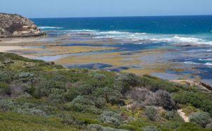 Cheviot Beach, a long term intertidal study site